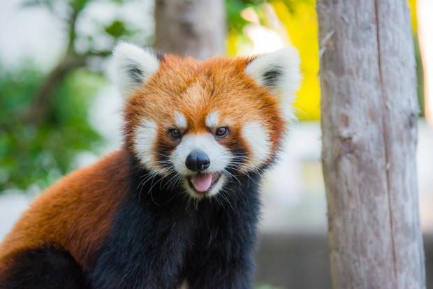 サンドーム福井の暇つぶしに西山動物園